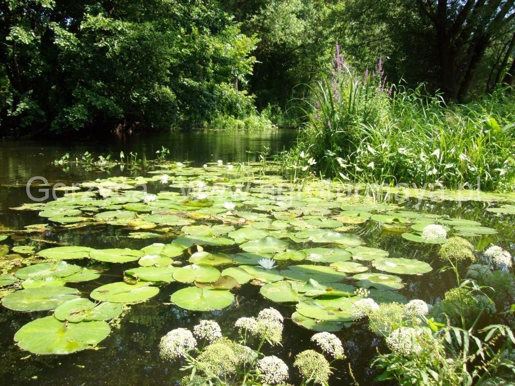 Kwiaty na rzece