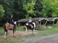 Jazda na koniu (4)