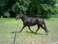 Konie (6)